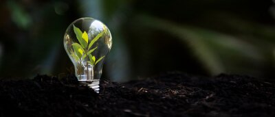 Bild Saving energy and environment. Tree growth in light bulb for saving Ecology energy nature. Eco and Technology concept, copy space for banner