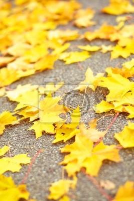 Yellow gefallenen Blätter auf dem Weg