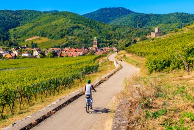 Bild Young woman cycling on road along vineyards to Kaysersberg village, Alsace Wine Route, France