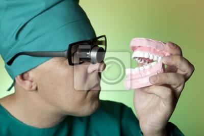 Zahnarzt mit Gipsmodell von menschlichen Zähnen