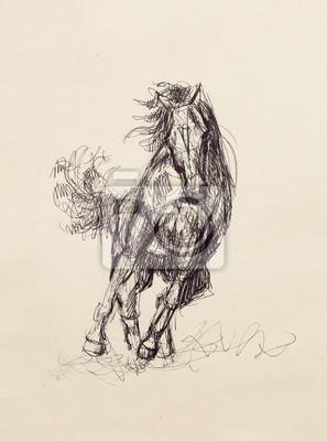 Altem Hand Pferd Papieroriginal Zeichnen Bleistift Sie Auf