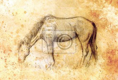 Bild Zeichnen Sie Bleistift Pferd Auf Altem Papier Vintage Papier