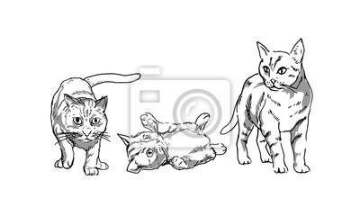 Zeichnungen von cats_vector Illustration