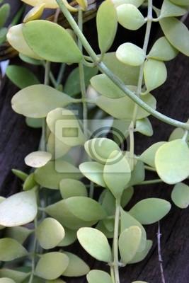 Bild Zierpflanze im Garten