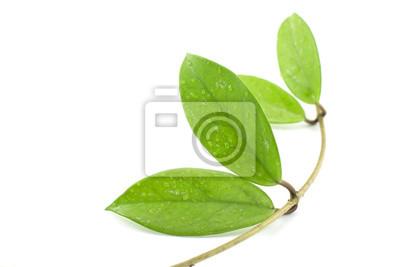 Bild Zierpflanzen