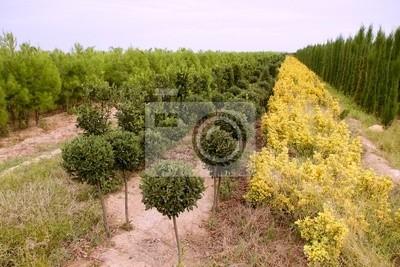 Bild Zierpflanzen bunten Feld