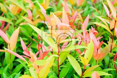 Bild Zierpflanzen Straßenrand I