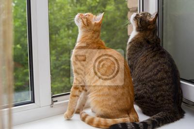 Zwei Katze Auf Der Fensterbank Sitzen Leinwandbilder Bilder