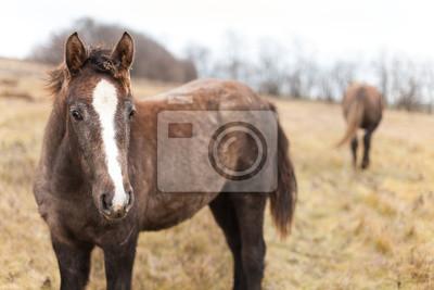 Zwei wilde Pferde zu Fuß in den Herbst Felder