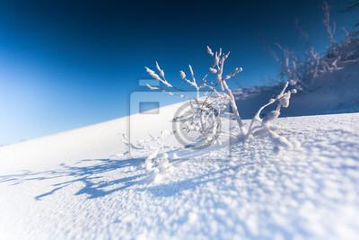 Zweig einer Pflanze mit Schnee bedeckt