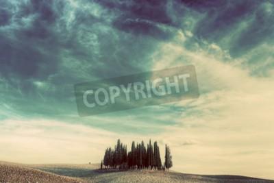 Bild Zypressen auf dem Feld in der Toskana, Italien bei Sonnenuntergang. Toskanische Landschaft im Jahrgang, Retro Stimmung