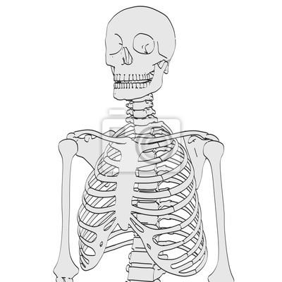 2d karikaturabbildung des menschlichen skeletts fototapete ...