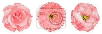 Fototapete 3 surreale exotische Qualitätsgoldblumen Makro lokalisiert auf Weiß. Grußkarte Objekte für Jubiläum, Hochzeit, Mütter und Frauen Tag Design