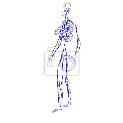 3d abbildung der menschlichen körper nerven anatomie fototapete ...