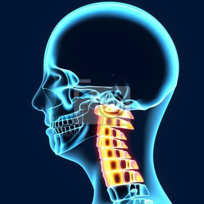 3d-darstellung der halswirbelsäule - teil des menschlichen skeletts ...