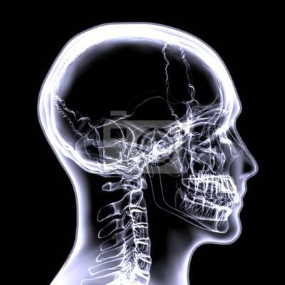 3d darstellung der menschlichen körper schädel anatomie fototapete ...