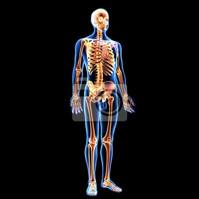 Schön Bild Von Der Anatomie Des Körpers Zeitgenössisch - Anatomie ...