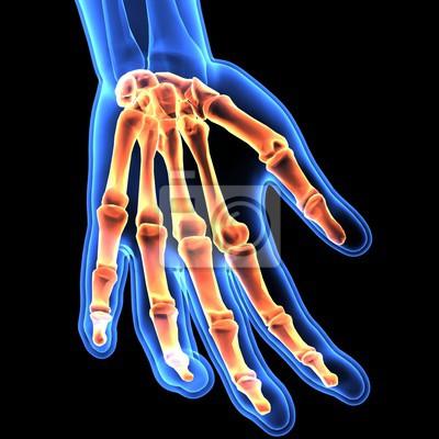 3d-darstellung von handskelett - teil des menschlichen skeletts ...