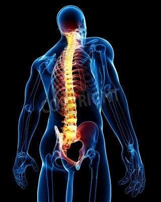 3d gerendert medizinische x-ray darstellung der männlichen ...