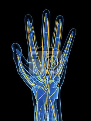 3d gerenderten bild der menschlichen hand nerven fototapete ...
