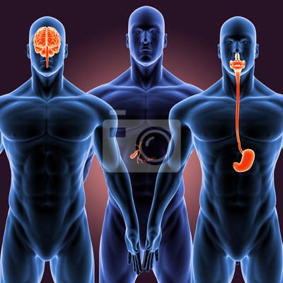 3d illustration menschlichen körper organs.human körperteil ...