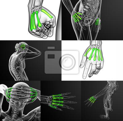 3d-rendering medizinische darstellung der metacarpal-knochen ...