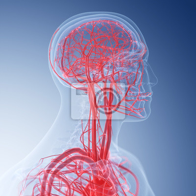 3d übertrug medizinisch genaue illustration der blutgefäße des ...