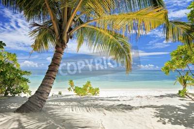 Fototapete A scene of palm trees and sandy beach in Maldives island