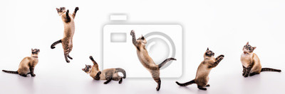 Fototapete A set of images of a playful cat that plays, jumps, grabs, sways on the floor