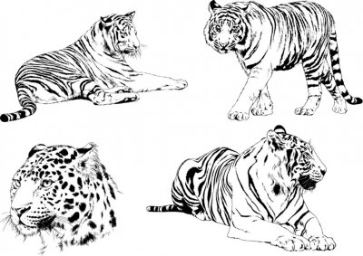 Fototapete a set of vector drawings of various predators , tigers and lions, drawn in ink by hand, realistic for the logo
