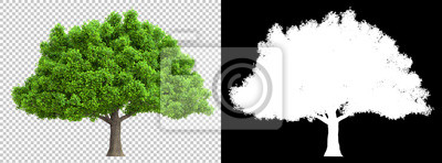 Fototapete a tree isolated with high detailed leaves with clipping path and alpha channel