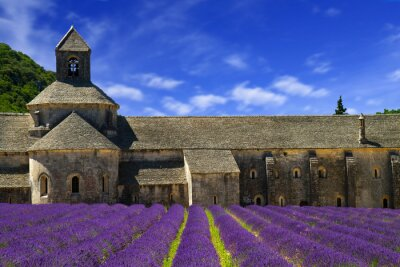 Fototapete Abbey of Senanque and blooming rows lavender flowers. Gordes, Lu