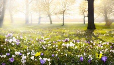 Fototapete abstract sonnigen schönen Frühling Hintergrund