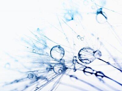Fototapete Abstrakt Makrofoto von Pflanzensamen mit Wassertropfen.