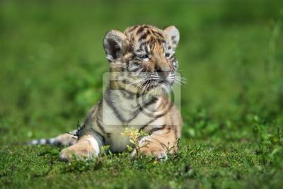 Adorable amur tiger cub portrait im freien