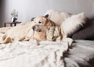 Fototapete Adorable Golden Retriever Hund Abdeckung Licht Pastell Grau Weiß  Skandinavischen Textile Dekorative Mantel Kissen Für