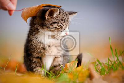 adorable tabby Kätzchen unter einem Herbstblatt