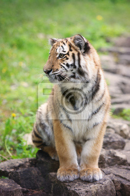 adorable Tiger Cub sitzen