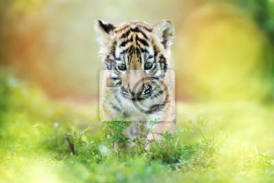 Adorable Tiger Cub zu Fuß im Freien