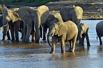 Fototapete Afrikanische Elefanten in der Savanne