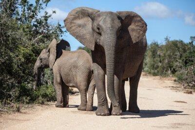 Fototapete Afrikanische Elefanten in der südafrikanischen Park