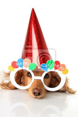 Alles Gute Zum Geburtstag Dackel Fototapete Fototapeten Eyewear
