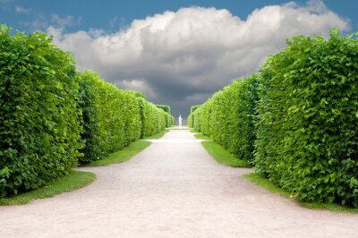 Fototapete alley in the Park with exactly topiary trees