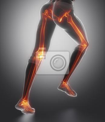 Am beinknochen anatomie konzentriert fototapete • fototapeten ...