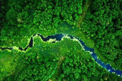 Fototapete Amazing blooming algae on green river, aerial view