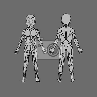 Anatomie der kinder muskel-system, bewegung und muskel-führer ...