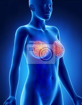Anatomie der weiblichen brust röntgenseitenansicht fototapete ...
