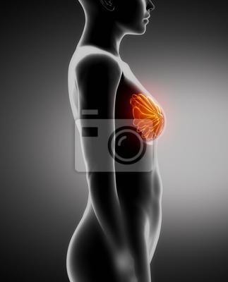 Anatomie der weiblichen brust x-ray-ansicht von links fototapete ...