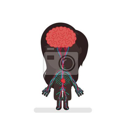 Anatomie des menschlichen körpers anatomie fototapete • fototapeten ...