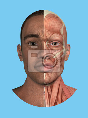 Anatomy split front view of face and major facial muscles of ...